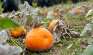 Toluca Lake Pumpkin Festival: Haunted-Maze and Petting-Zoo Visit for Four, Six, or Eight at Toluca Lake Pumpkin Festival (Up to 66% Off)
