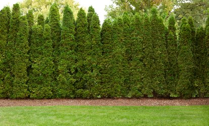 Up to 56% Off from Absolute Green Landscaping