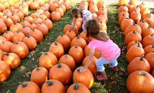 Blackburn Pumpkin and Sunflower Farm: Two or Four Admission and Hayride Tickets to Blackburn Pumpkin and Sunflower Farm (Up to 50% Off)