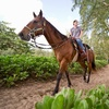 Up to 32% Off Riding Lessons at High Standard Equestrians