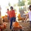 42% Off Pumpkin Festival at Charmingfare Farm
