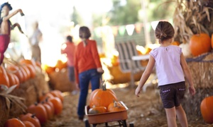 Harvest Farm: 13th Annual Harvest Farm Fall Festival and Corn Maze Admission for Two, Four, or Six (Up to 53% Off)