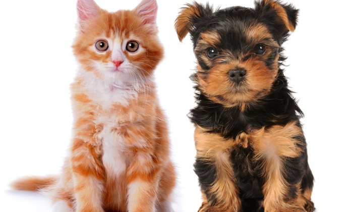 Pets R Us Veterinary Hospitals - Multiple Locations: Canine and Feline Vaccinations at Pets R Us Veterinary Hospitals (Up to 40% Off)