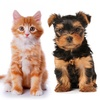Up to 40% Off at Pets R Us Veterinary Hospitals
