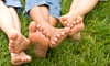 Road Runner Lawn and Pest - Salt Lake City: $77 for $140 Worth of Pest-Control Services — Road Runner Lawn & Pest