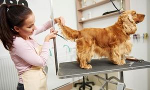 Tom and Beauty: Toilettage pour petit, moyen et grand chien dès 19,99 € au salon de toilettage Tom and Beauty