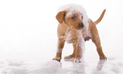 Pet grooming deals coupons groupon shop groupon up to 39 off dog bath package at doggie spa solutioingenieria Gallery