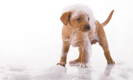 Sesión de peluquería canina con corte para perros de hasta 40 kg desde 14,95 € en Jago Mascotas