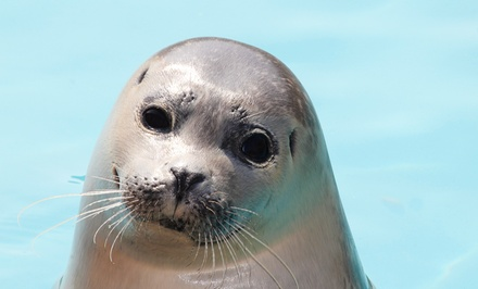 Two-Hour Seal-Watching Tour for Two or Four from Captain Lou Fleet (Up to 53% Off)