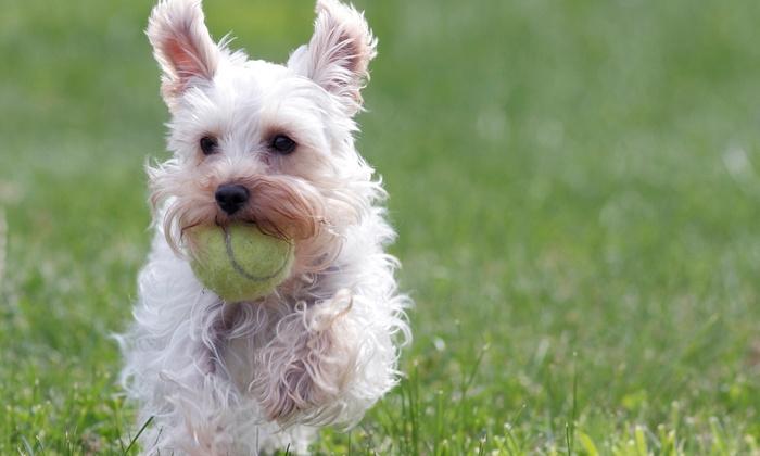 Kiss & Tail - Willowridge - Martin Grove: Two, Three, or Five Consecutive Days of Pet Boarding or Five Days of Consecutive Daycare at Kiss & Tail (61% Off)