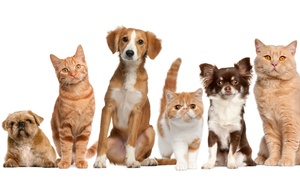 Best Friends Veterinary Hospital: Cat and Dog Veterinary Services at Best Friends Veterinary Hospital (50% Off). Four Options Available.