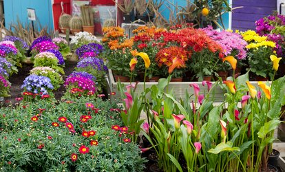 image for Seasonal Decor, Home Accessories, and Plants at Victoria's Nursery (Up to 50% Off). Two Options Available.