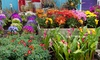 Lily Bunch - Lily Bunch: Floral Arrangements with Delivery from Lily Bunch (Up to 51% Off). Two Options Available.