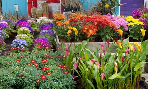 Fort Worth Botanic Garden: $25 for $50 Worth of Plants at the Fort Worth Botanic Garden Plant Sale on October 9th and 10th, 2015