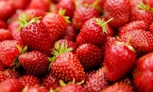 Gut Clarenhof Hofladen GbR: 4 kg Erdbeeren selber pflücken bei Gut Clarenhof Hofladen GbR (50% sparen*)
