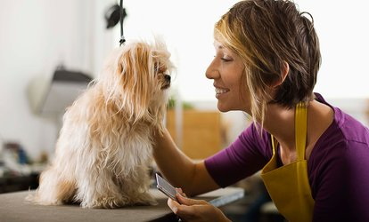 image for Online Dog and Cat Grooming Course with Pet Addict