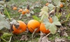 Argos Farm - Lacey: Fall Outing for Two or Four at Argos Farm (Up to 52% Off)