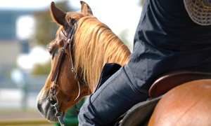 Go With It Farm: Two, Four, or Eight Horse-Riding Lessons at Go With It Farm (Up to 61% Off)