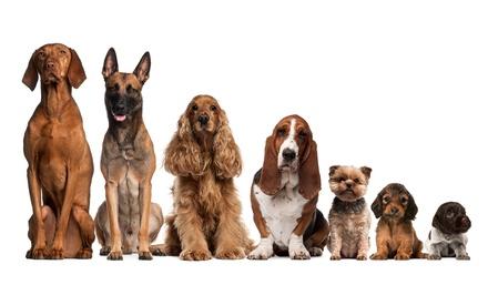Sesión de peluquería canina desde 11,90 € en El Pastor Alemán