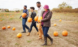Fall at The Farm – Up to 42% Off  at Berryland Farms of Texas, plus 6.0% Cash Back from Ebates.