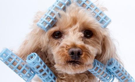 Sesión de peluquería canina con baño, arreglo y corte desde 14,90 €