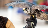 Three-Hour Falconry Experience for One or Two (Up to 64% Off)