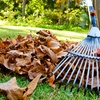 Up to 55% Off Leaf Removal