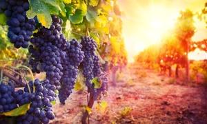 Bodegas Araico Sc: Visita a 2 bodegas con cata de 3 vinos, picoteo y botella para 2, 4 o 6 personas desde 16,95 € en Bodegas Araico Sc