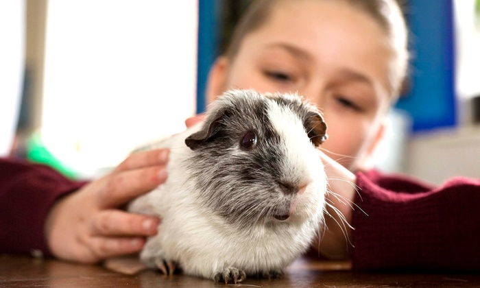 Pawsitively Pets For Kids - Toronto (GTA): C$129 for One-Hour Hands-On Animal Event or Party with Pawsitively Pets For Kids (C$195 Value)