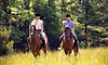 Horse And Soul - Castle Rock: Two Horseback-Riding Lessons at Horse and Soul (65% Off)