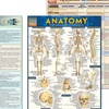 Quick Tips for a Healthy You Laminated Reference Guide Set (4-Piece)