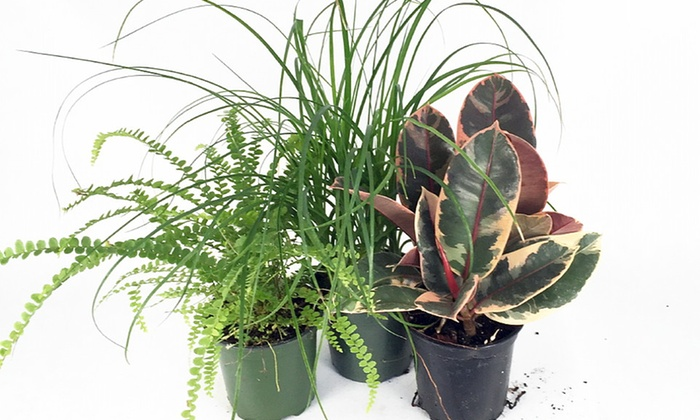 Cat Friendly Houseplant Collection
