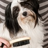 Evelots Double-Sided Bristle and Pin Pet Brush