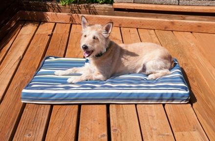 Weather Resistant Orthopedic Medium Pet Bed
