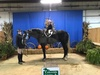 Up to 45% Off on Horse Back Riding - Recreational at Timberwind Sport Horses