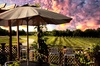 Up to 48% Off on Tour - Wine / Vineyard at Tidewater Winery