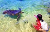 Up to 55% Off on Tour - Guided at Hawaii Turtle Tours