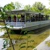 Up to 63% Off Swamp Boat Tour with Louisiana Tour Company