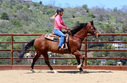 Up to 47% Off on Horse Back Riding - Training at BridleVine Riding Club