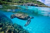 Up to 25% Off on Tour - Guided at Hawaii Turtle Tours