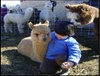 Up to 21% Off Admission to Strawberry Fields Alpaca Ranch