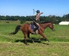 Up to 43% Off on Horse Back Riding - Recreational at United Liberty Horse Archers