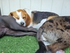 Up to 54% Off on Pet - Daycare at Dawg House Daycare and Boarding
