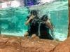 Up to 58% Off on Aquarium Visit at SeaQuest Interactive Aquarium - Vegas