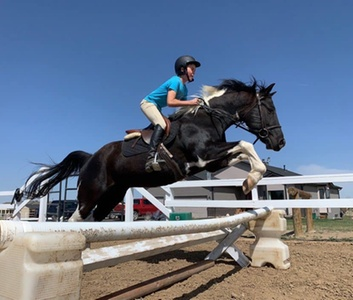 Up to 57% Off on Horse Back Riding - Training at Allegro Equestrian