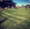 50% Off Lawn / Garden Care