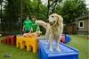 50% Off Services at Rivermist Pet Lodge