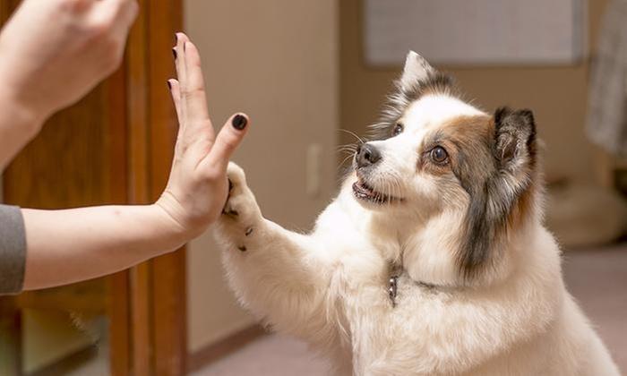 Aula Global: Curso online Aprende a Adiestrar y Cuidar a tu Perro en Aula Global