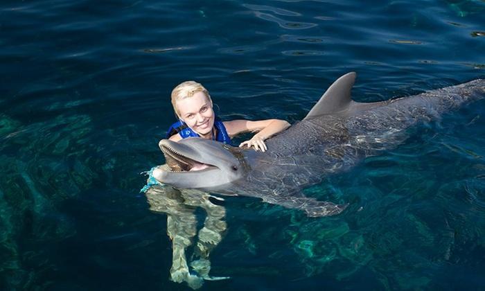 Delphinus Nado con Delfines: Riviera Maya: desde $1,304 por tour con entrada a parque Xel-Há + nado con delfines + alimentos y bebidas para niño o adulto