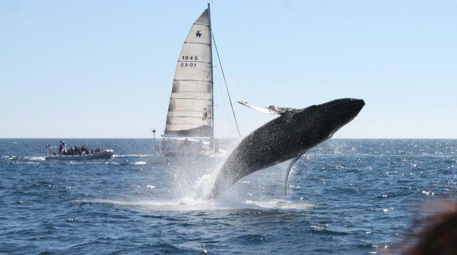 LA PRINCESA CATAMARANS: Avistamiento de ballenas + bebidas + snacks en Cabo San Lucas con Princesa Catamarans